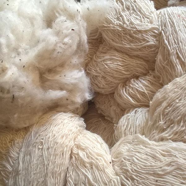 cotton charkha1